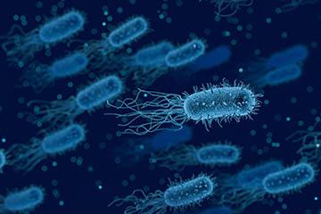 Effektive Mikroorganismen
